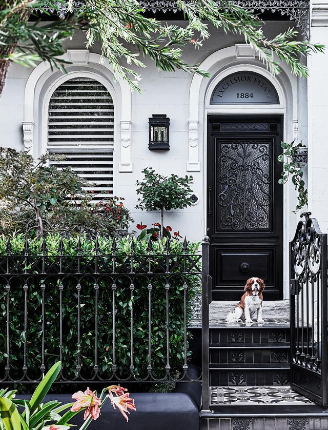 "Walter, the owners' cavalier King Charles spaniel stands proudly out front of their renovated 1880s Sydney [terrace home](https://www.homestolove.com.au/1880s-sydney-terrace-home-with-charming-interiors-20319|target=""_blank"")."