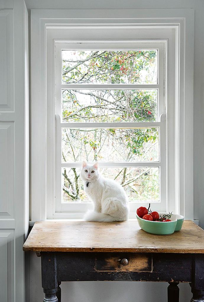 "Bathed in natural light this [sandstone cottage](https://www.homestolove.com.au/designer-reno-of-1930s-cottage-13634|target=""_blank"") is the heart of Fiona Budzynski's textile design business. Her cat Eskimo is a fitting companion in the bright space."