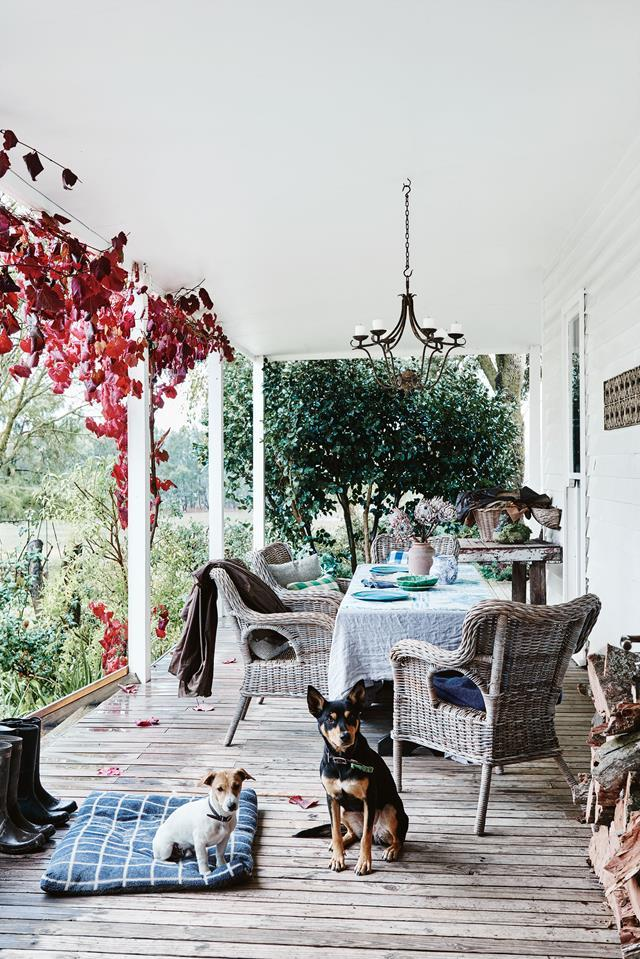 "This [white timber homestead](https://www.homestolove.com.au/white-timber-homestead-12454|target=""_blank"") is wrapped with deep verandahs and surrounded by a beautiful garden. Max and Sammy camp out on the verandah, where the family often gather for lunch."