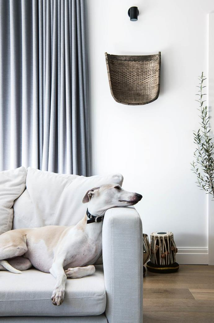 """Toby the whippet truly looks at home lounging on the sofa in this [Blue Mountains abode](https://www.homestolove.com.au/white-light-filled-home-in-the-blue-mountains-nsw-13917