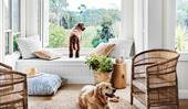 14 pets that turned a house into a home