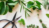 5 herbs to grow to boost your mood