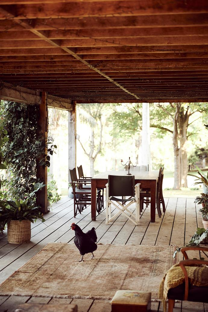 A resident chook wanders across the Fewsons' verandah.