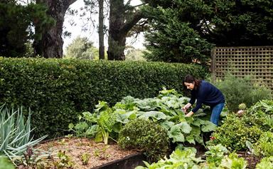 Vegetables to plant in April
