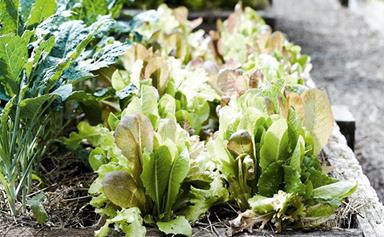 5 tips for creating a self-sufficient garden