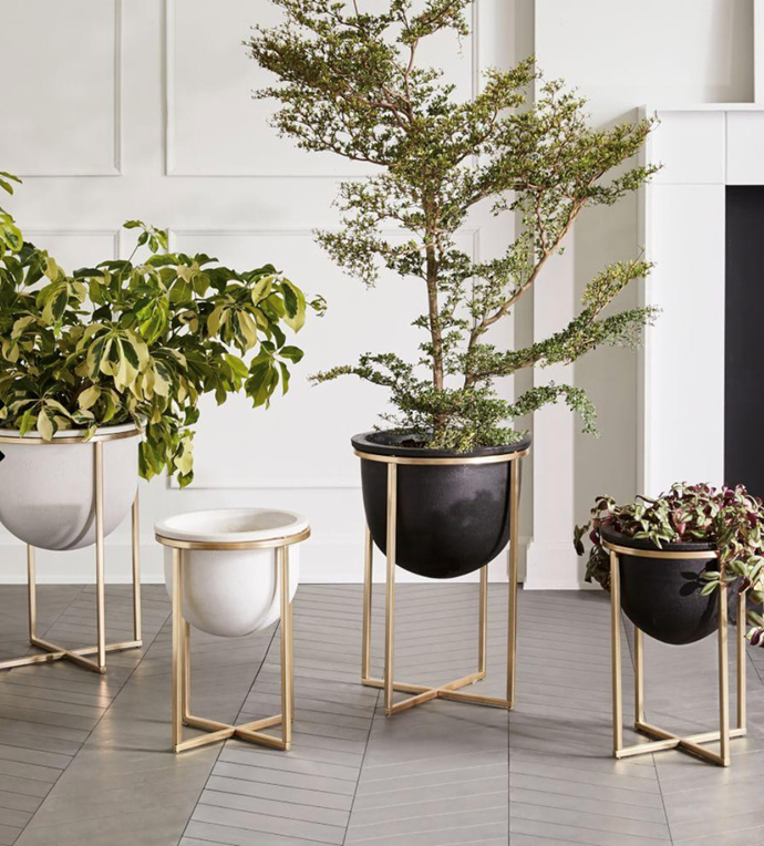 "Eden Cross Base Standing Planter, from $139, [West Elm](https://www.westelm.com.au/cement-metal-standing-planter-d4646|target=""_blank""