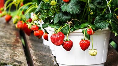 5 of the best fruit and vegetables to grow in pots and containers