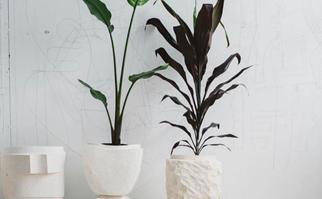 indoor pot plants
