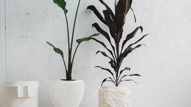 20 perfect pots for your indoor plants