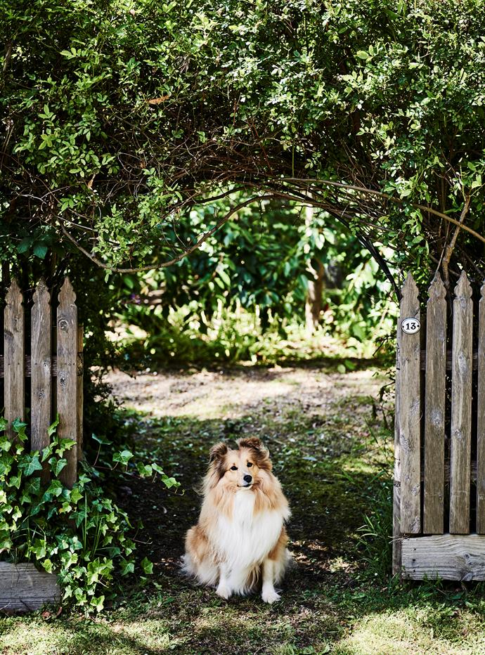 Emmy at the front gate.