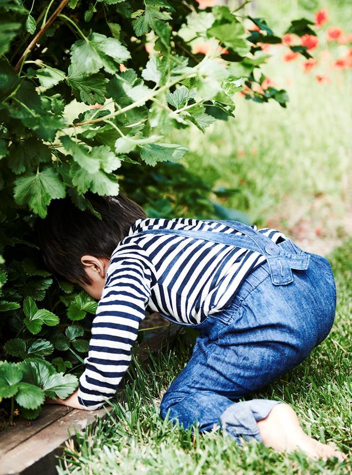 Haruki foraging in the garden.