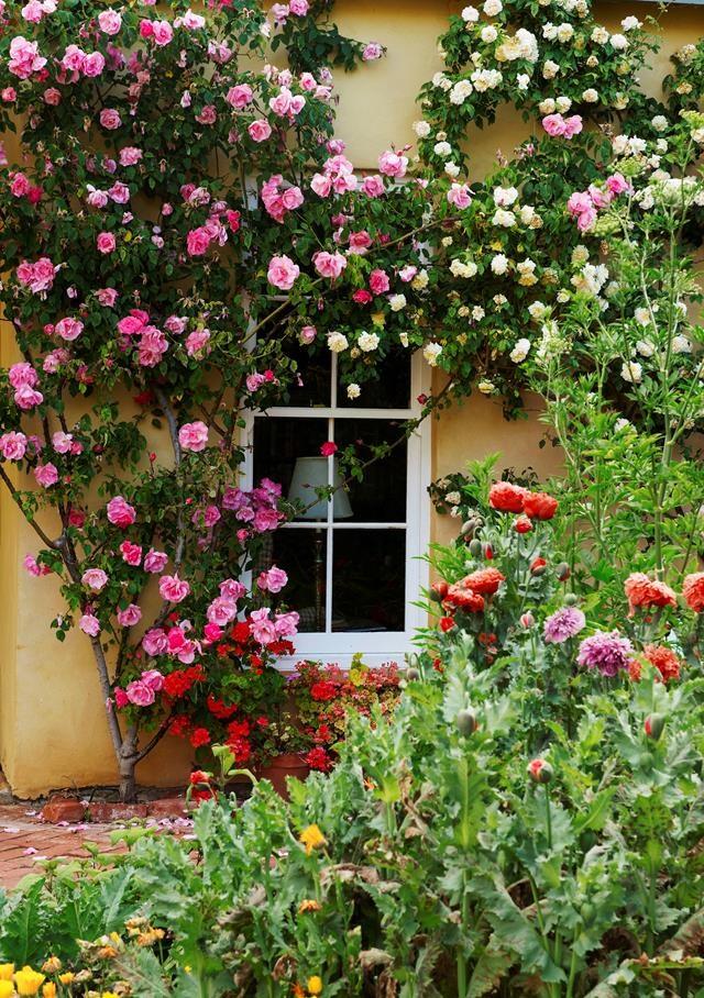 Climbing roses flourish along a sunny wall.