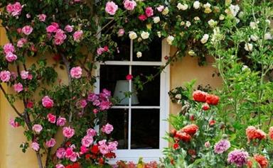 The best climbing plants and how to grow them