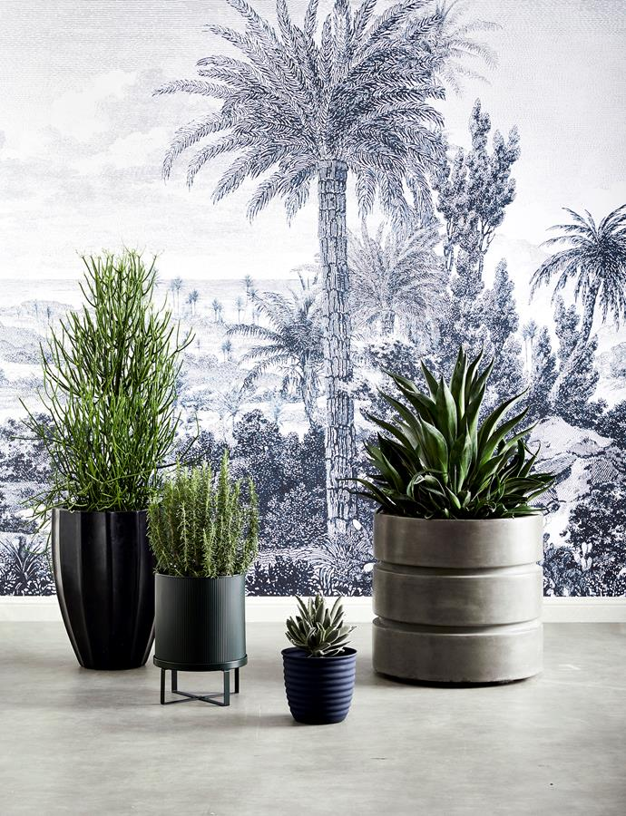 FROM LEFT: Allia concrete planter in Black, $225 for medium, Coco Republic. Ferm Living 'Bau' plant pot in Dark Green, $120 for large, Amara. Ranger 'Sky' ribbed pot in Denim, $99 for 2 sizes, Canvas + Sasson. Newport planter, as before. Tropicana wall mural, Kingdom Home.