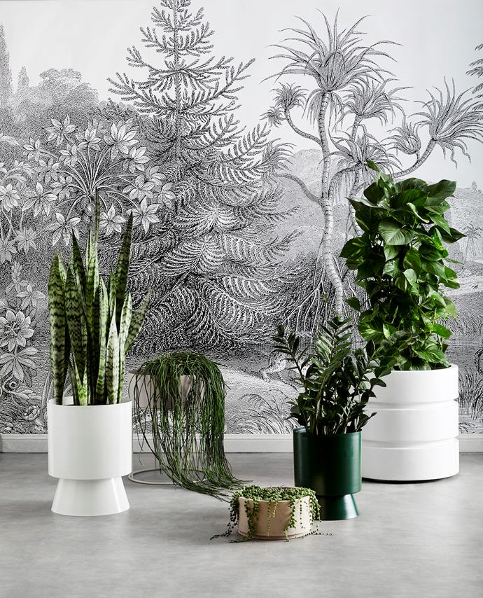 FROM LEFT: Palm Springs extra-large planter in White, $405, Lightly. Ferm Living round plant box in Cashmere, $342, Amara. Terracotta drum pot, $155, Garden Life. Palm Springs large planter in Forest, $310, Lightly. Newport planter, $295 for small, Coco Republic. Rebel Walls 'Jungleland' wallpaper in R14612, $85 per sq m, Scandinavian Wallpaper & Décor.