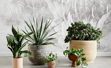 19 low-maintenance plants you barely have to water