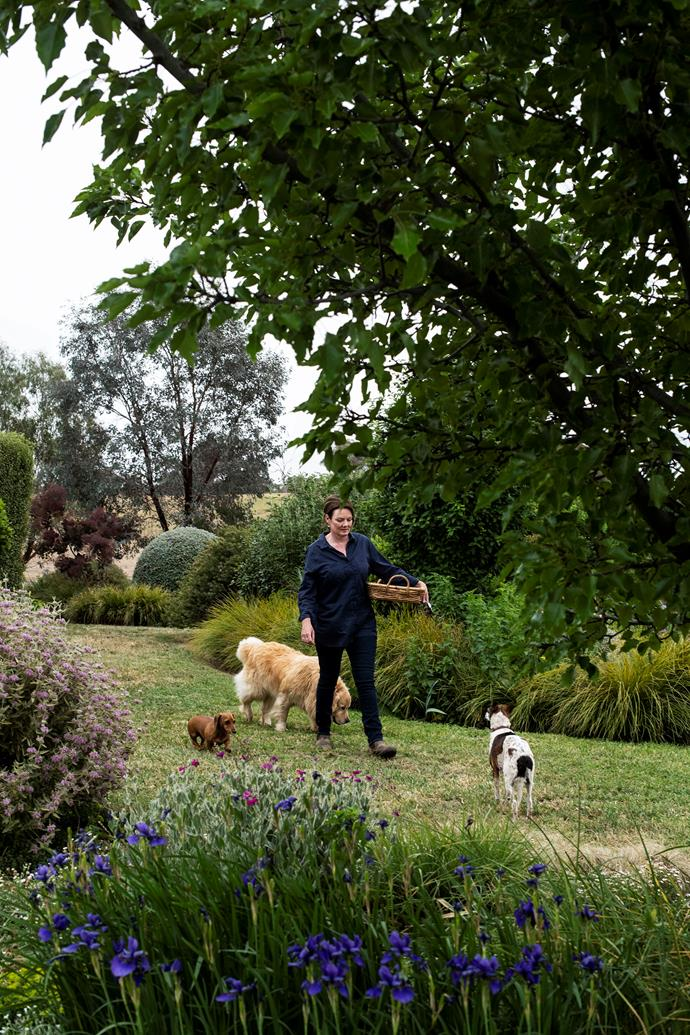 Artist Colleen Southwell with dachshund Arlo, golden retriever Hugo and whippet fox terrier cross Lollipop in her garden at Lang's Crossing, her family's property near Orange, NSW.