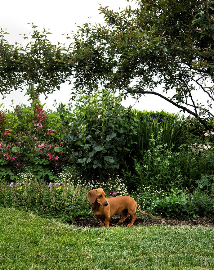 Arlo beneath a crabapple tree in front of the rose garden.