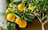 Dwarf fruit trees: How to grow and care for