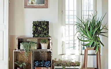 Pot plants: the best plants for pots and how to care for them