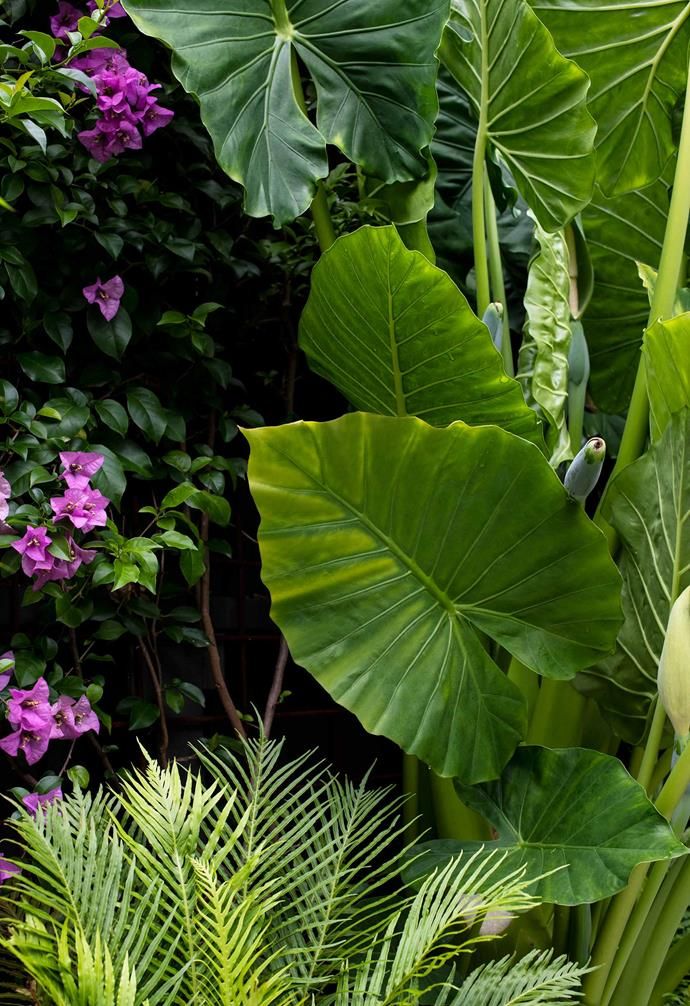 Above are broadleaf lady palms and directly below the deck is a bromeliad. To the left is a giant elephant ear plant and purple bougainvillea. The fern is Blechnum gibbum 'Silver Lady'.