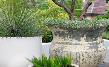 The top 15 potted plants for your garden