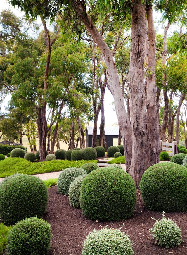When pruning topiary, a wire guide may be required.