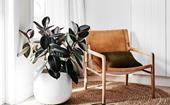 The 6 best indoor plants for your home this winter