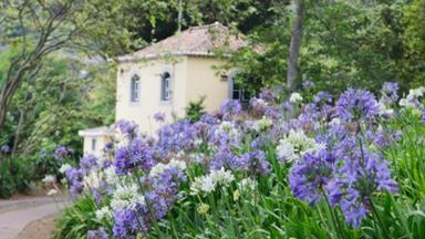 Agapanthus: How to grow and care for