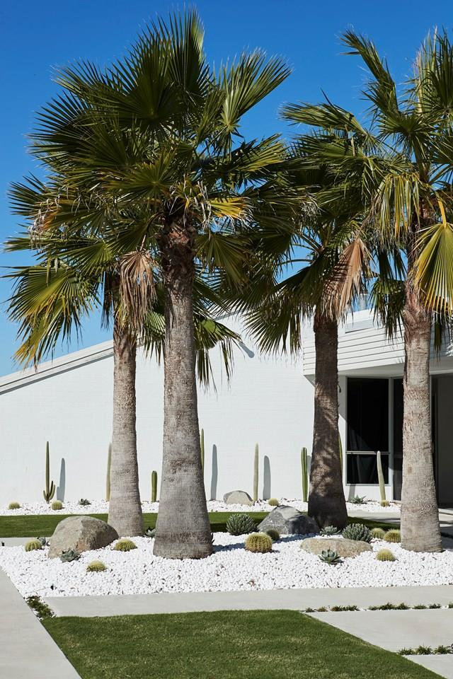 """A minimalist, low-maintenance garden featuring palms and hardy cacti, combined with the crisp white exterior, give this cool [Queensland home](https://www.homestolove.com.au/oracle-fox-amanda-shadforth-home-20153