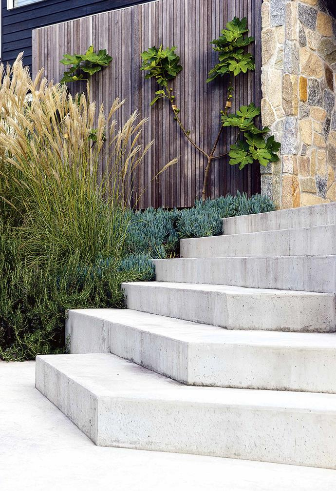"**STEP UP** The concrete steps are a pivotal element of the garden, playing a crucial role while also being bold and striking. Formed on site with off-white concrete, the stairway links the drive and parking area to the residence in a series of angled steps. The steps vary from single to double treads, creating space to pause, linger or sit. The slope by the steps is planted with miscanthus 'Hiawatha' and chalksticks [groundcover](https://www.homestolove.com.au/a-guide-to-groundcovers-3632|target=""_blank"")."