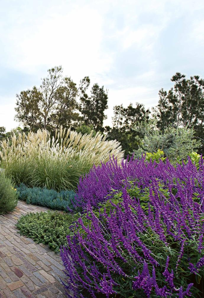 "**SOFTEN THE EDGE** The [purple plant](https://www.homestolove.com.au/purple-plants-australia-20801|target=""_blank"") spires of Mexican sage cut a swathe of intense colour across the backdrop of neutral tones. The feathery heads of *miscanthus* 'Hiawatha' add a highlight that marks seasonal change, and brings softness to the stone and timber. 'Filetti' cobble-style paving is teamed with Jericho limestone flooring inside the gate; both are from [Eco Outdoor](https://www.ecooutdoor.com.au/