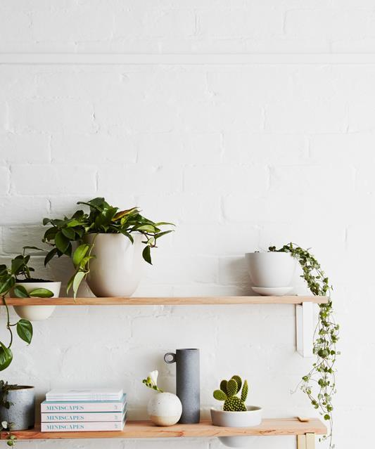 Trailing Indoor Plants Vines To Drape Over Your Bookshelf Homes To Love
