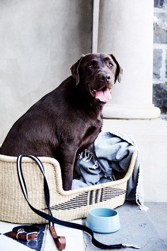 Every dog deserves a warm and comfortable place to curl up in at night and no, we're not talking about your bed!