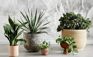 How to create potted plant gifts