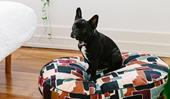 12 stylish dog beds for all breeds