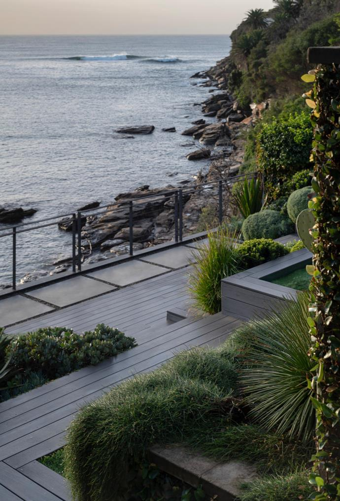 The lower deck is flanked by an array of succulents and natives, many in glaucous shades.