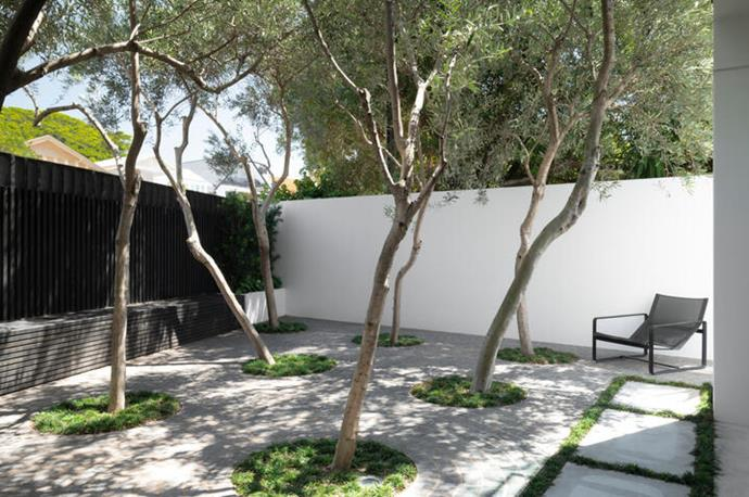 The secluded courtyard has pared olive trees and Mexican giant cardon cactus making a bold statement in one corner.