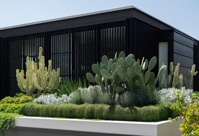 Candelabra spurge, wheel cactus and saturn aloes underplanted with flowing casuarina, cotyledons and twin-flowered agaves make a bold statement on the garage roof.