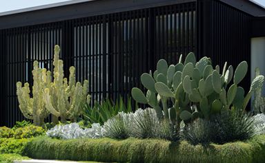 A striking seaside garden in Sydney with sculptural plantings