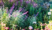 How to keep your garden happy during winter