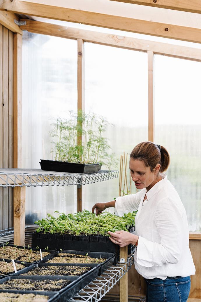 Marian checks on seedlings in the glasshouse.