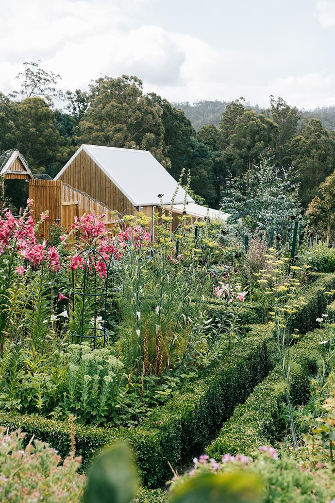 A view of the glasshouse and shed.