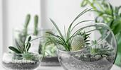 Terrariums: how to make a miniature garden