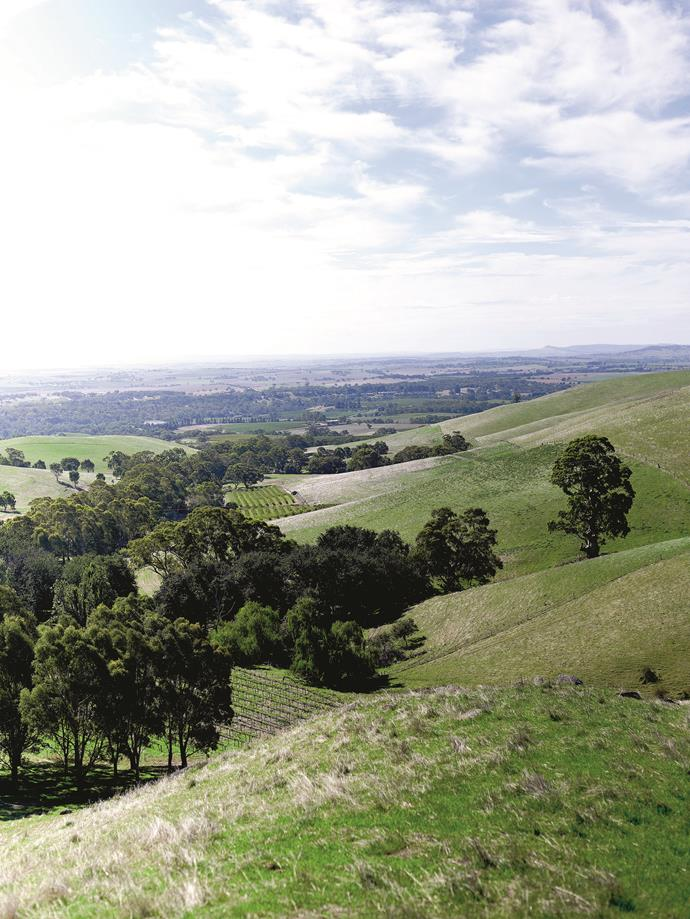 The rolling hills of the Barossa Valley.