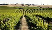 Barossa Valley: the best wineries, restaurants and things to do