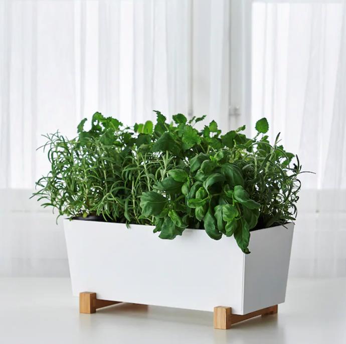 "BITTERGURKA Plant pot, white, 32x15 cm, $14.99, [IKEA](https://www.ikea.com/au/en/p/bittergurka-plant-pot-white-40289495/ target=""_blank"" rel=""nofollow"")"