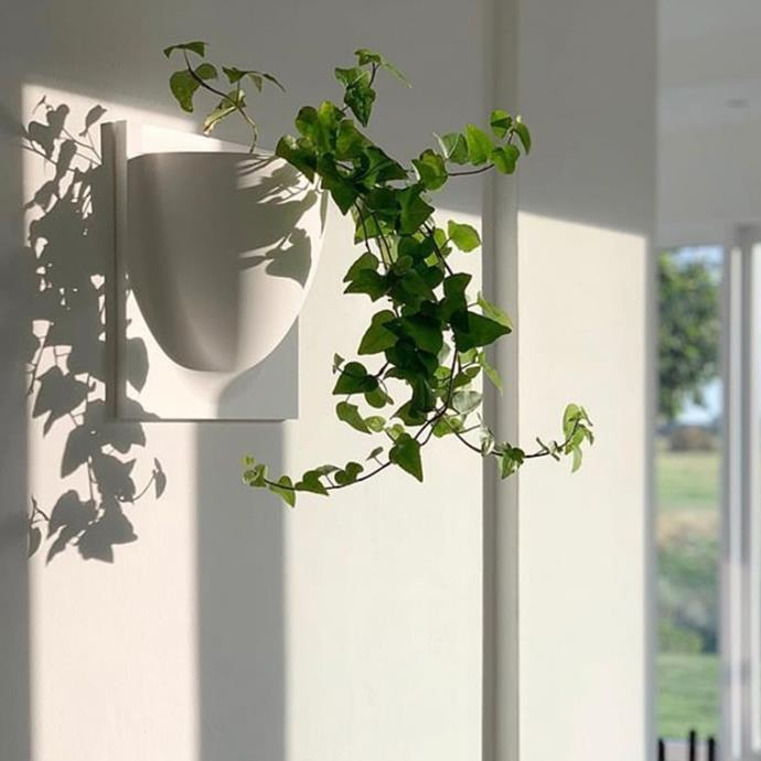 """Frenchams Wall Planter, POA, [Frenchams](https://www.frenchams.com.au/range/green-walls-and-hanging-planters/ target=""""_blank"""" rel=""""nofollow"""")"""