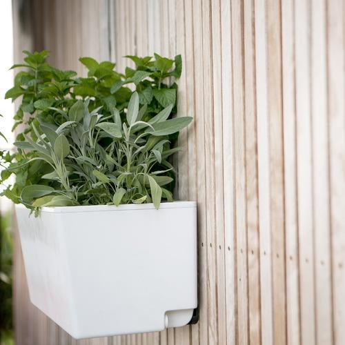 """Glowpear Mini Self Watering Wall Planter, $139, [Temple & Webster](https://www.templeandwebster.com.au/Mini-Self-Watering-Wall-Planter-MWAL001AUS-GLOW1002.html?refid=GPAAU447-GLOW1002&device=c&ptid=742896899175&gclid=CjwKCAjwq832BRA5EiwACvCWsa6hi6or4-3PUDu6o9vEiAFu2vMdgeus4zrKMHcJer28hAinvquaXRoCtZoQAvD_BwE target=""""_blank"""" rel=""""nofollow"""")"""