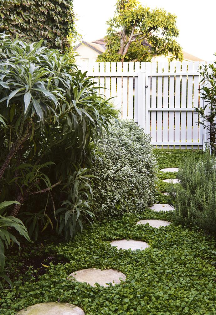 Planting ample groundcover in your garden can instantly transform the look of your home. In this urban garden, *dichondra repens* surrounds circular pavers to create a striking pathway through the space.